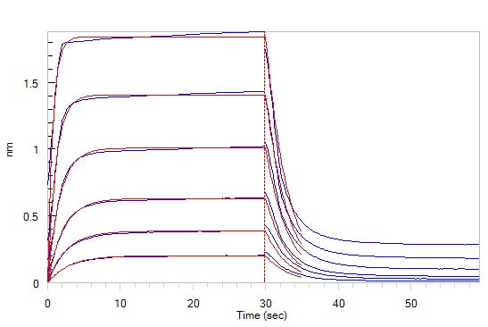 Functional Studies - Recombinant human CD32A protein (Active) (Biotin) (ab246082)