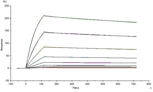 Functional Studies - Recombinant human Mesothelin protein (Active) (ab246135)