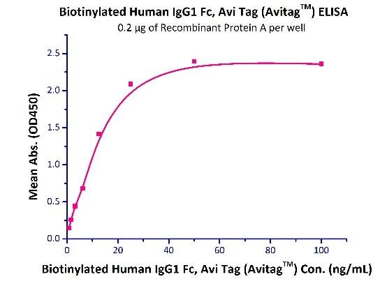 Functional Studies - Recombinant human IgG1 protein (Active) (Biotin) (ab246221)
