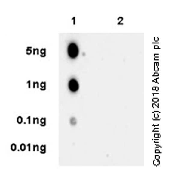 Dot Blot - Anti-TIM 3 antibody [EPR22285-13] - BSA and Azide free (ab246318)