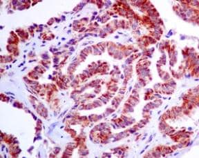 Immunohistochemistry (Formalin/PFA-fixed paraffin-embedded sections) - Anti-IDH2 antibody [EPR7576] - BSA and Azide free (ab246343)