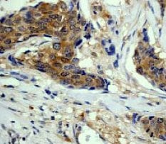Immunohistochemistry (Formalin/PFA-fixed paraffin-embedded sections) - Anti-eIF4E antibody [Y449] - BSA and Azide free (ab246346)