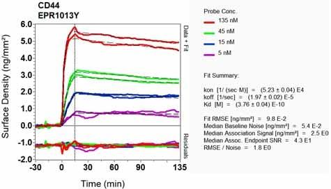 Other - Anti-CD44 antibody [EPR1013Y] - Low endotoxin, Azide free (ab246690)