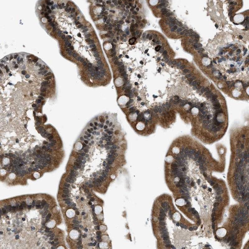 Immunohistochemistry (Formalin/PFA-fixed paraffin-embedded sections) - Anti-FAM134C antibody (ab246913)