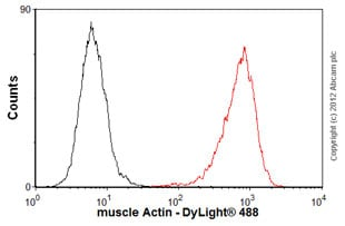 Flow Cytometry - Anti-muscle Actin antibody [EP184E] - BSA and Azide free (ab247305)