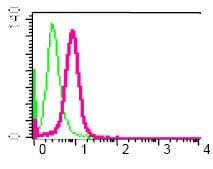 Flow Cytometry - Anti-VAV3 antibody [EP1130Y] - BSA and Azide free (ab247340)