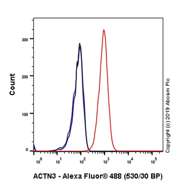Flow Cytometry (Intracellular) - Anti-ACTN3 antibody [EP2531Y] - BSA and Azide free (ab247376)