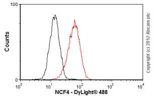 Flow Cytometry - Anti-p40-phox antibody [EP2142Y] - BSA and Azide free (ab247448)