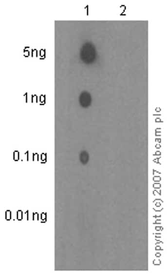 Dot Blot - Anti-RNA polymerase II CTD repeat YSPTSPS (phospho S5) antibody [EP1510Y] - BSA and Azide free (ab247458)