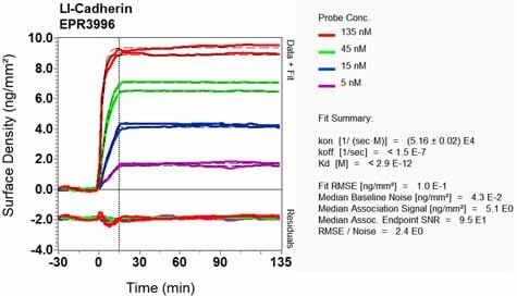 OI-RD Scanning - Anti-LI Cadherin antibody [EPR3996] - BSA and Azide free (ab247786)