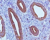 Immunohistochemistry (Formalin/PFA-fixed paraffin-embedded sections) - Anti-IQGAP1 antibody [EPR5221] - BSA and Azide free (ab247821)