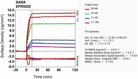 OI-RD Scanning - Anti-SARA antibody [EPR5020] - BSA and Azide free (ab248032)