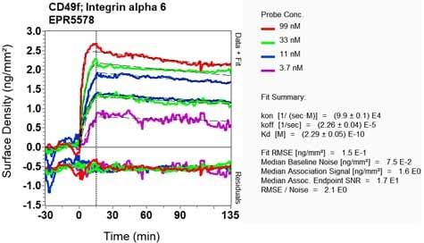 OI-RD Scanning - Anti-Integrin alpha 6 antibody [EPR5578] - BSA and Azide free (ab248060)