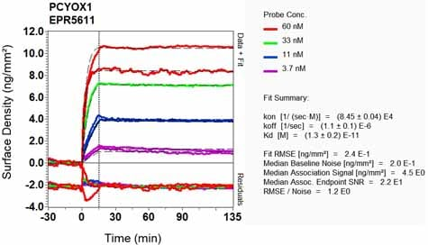 Other - Anti-PCYOX1 antibody [EPR5611] - BSA and Azide free (ab248075)