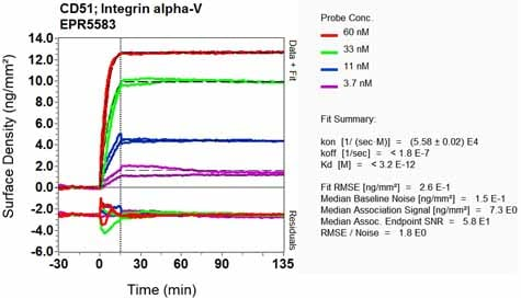 OI-RD Scanning - Anti-Integrin alpha V antibody [EPR5583] - BSA and Azide free (ab248077)