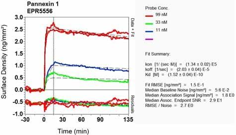 OI-RD Scanning - Anti-Pannexin 1 antibody [EPR5556] - BSA and Azide free (ab248078)