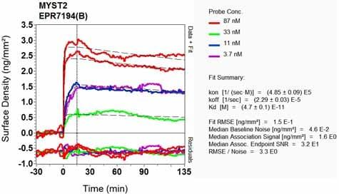 OI-RD Scanning - Anti-KAT7 / Hbo1 / MYST2 antibody [EPR7194(B)] - BSA and Azide free (ab248087)