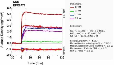 OI-RD Scanning - Anti-CSK antibody [EPR6771] - BSA and Azide free (ab248095)