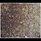 Immunohistochemistry (Formalin/PFA-fixed paraffin-embedded sections) - Anti-CSK antibody [EPR6771] - BSA and Azide free (ab248095)