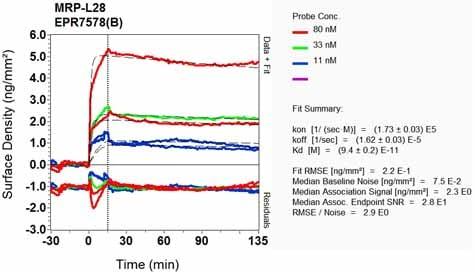 Other - Anti-MRPL28 antibody [EPR7578(B)] - BSA and Azide free (ab248145)