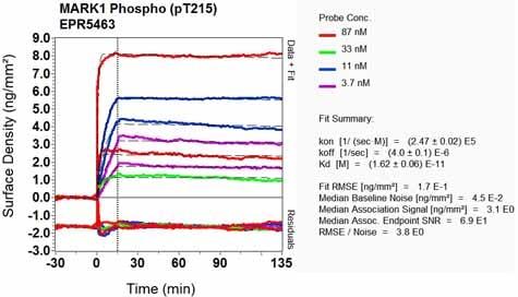 OI-RD Scanning - Anti-MARK1 (phospho T215) antibody [EPR5463] - BSA and Azide free (ab248152)