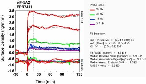 OI-RD Scanning - Anti-eIF5A2 + eIF5A antibody [EPR7411-6] - BSA and Azide free (ab248154)