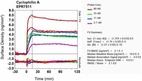 OI-RD Scanning - Anti-Cyclophilin A antibody [EPR7511] - BSA and Azide free (ab248157)