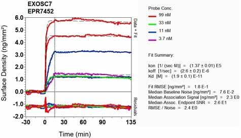 OI-RD Scanning - Anti-RRP42 antibody [EPR7452] - BSA and Azide free (ab248166)
