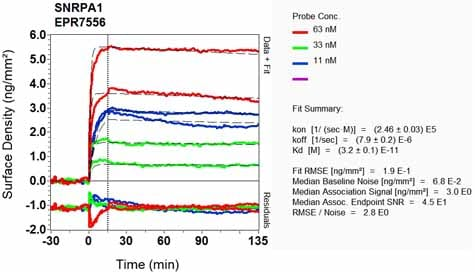 OI-RD Scanning - Anti-SNRPA1 antibody [EPR7556] - BSA and Azide free (ab248194)