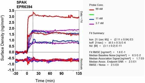OI-RD Scanning - Anti-SPAK antibody [EPR6394] - BSA and Azide free (ab248204)