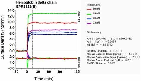 OI-RD Scanning - Anti-Hemoglobin subunit delta antibody [EPR8323(B)] - BSA and Azide free (ab248234)