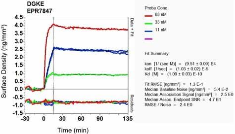 Other - Anti-DGKE antibody [EPR7847] - BSA and Azide free (ab248242)