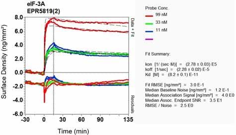 OI-RD Scanning - Anti-eIF3A antibody [EPR5819(2)] - BSA and Azide free (ab248250)