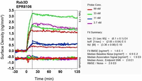 OI-RD Scanning - Anti-Rab3D antibody [EPR8106] - BSA and Azide free (ab248251)