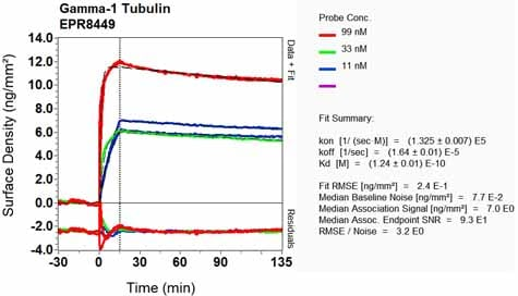 OI-RD Scanning - Anti-TUBG1 antibody [EPR8449] - BSA and Azide free (ab248266)