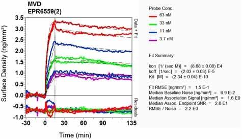 Other - Anti-MVD antibody [EPR6559(2)] - BSA and Azide free (ab248271)