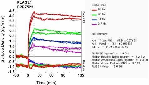 OI-RD Scanning - Anti-PLAGL1 / ZAC antibody [EPR7523] - BSA and Azide free (ab248273)