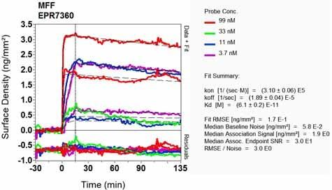 OI-RD Scanning - Anti-MFF antibody [EPR7360] - BSA and Azide free (ab248282)
