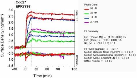 OI-RD Scanning - Anti-Cdc27 antibody [EPR7798] - BSA and Azide free (ab248290)