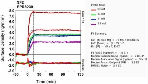 OI-RD Scanning - Anti-SF2 antibody [EPR8239] - BSA and Azide free (ab248306)