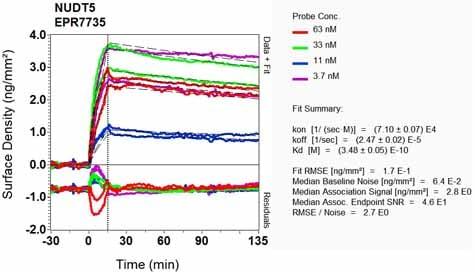 Other - Anti-NUDT5 antibody [EPR7735] - BSA and Azide free (ab248321)