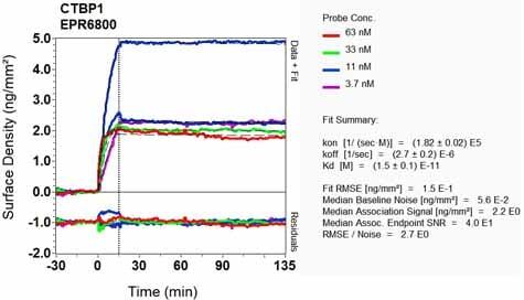OI-RD Scanning - Anti-CtBP1 antibody [EPR6800] - BSA and Azide free (ab248335)