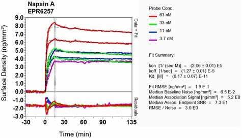 OI-RD Scanning - Anti-NAPSIN A antibody [EPR6257] - BSA and Azide free (ab248340)