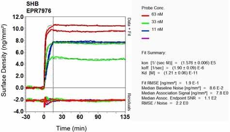 OI-RD Scanning - Anti-SHB antibody [EPR7976] - BSA and Azide free (ab248341)