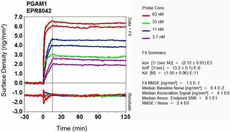 Other - Anti-PGAM1 antibody [EPR8042] - BSA and Azide free (ab248342)