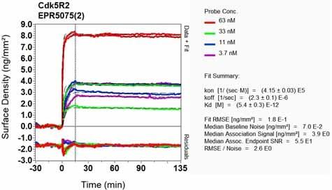 OI-RD Scanning - Anti-p39 antibody [EPR5075(2)] - BSA and Azide free (ab248345)