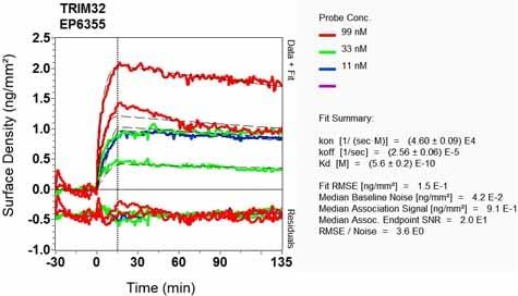 OI-RD Scanning - Anti-TRIM32 antibody [EP6355] - BSA and Azide free (ab248382)