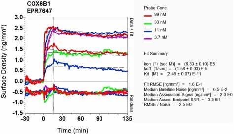 OI-RD Scanning - Anti-COX6B1 antibody [EPR7647] - BSA and Azide free (ab248401)