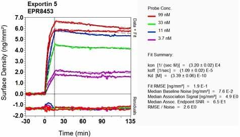 OI-RD Scanning - Anti-Exportin-5 antibody [EPR8453] - BSA and Azide free (ab248404)