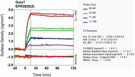 Other - Anti-GATA1 antibody [EPR2820(2)] - BSA and Azide free (ab248439)